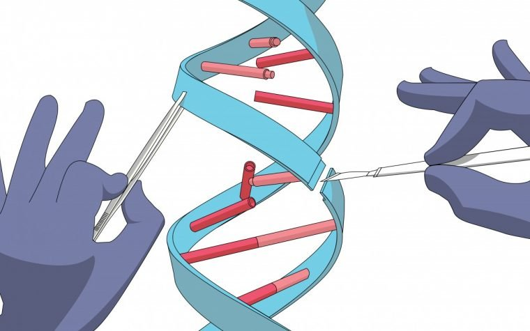 Two Types of CRISPR Gene Editing Could Be Useful in Treating Sickle Cell Anemia, Editas Reports