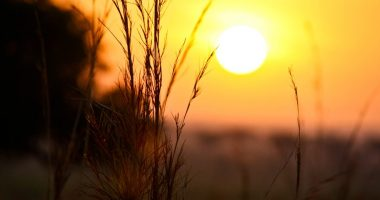 summer \ Sickle Cell Disease News \ A stock photo of a bright orange sun on a hazy day that invokes the summertime heat